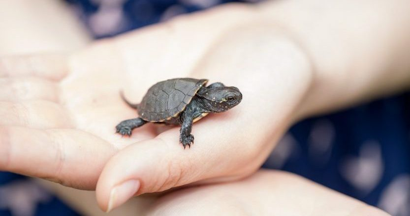 Tips For Sea Turtle Lifespan You Can Make Use Of Today
